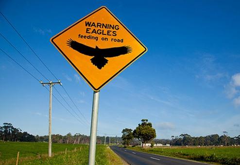 Предупреждение о возможности столкнуться на дороге с орлами